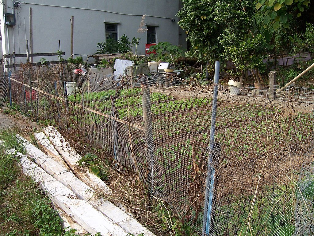 off the grid vegetable garden