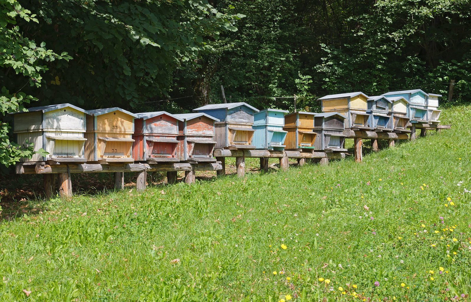 Beehives near La Balme de Thuy, France by Myrabella